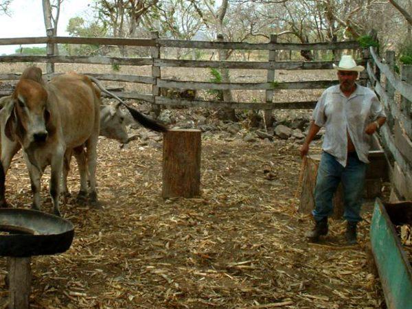 Veehouderij in Chontales